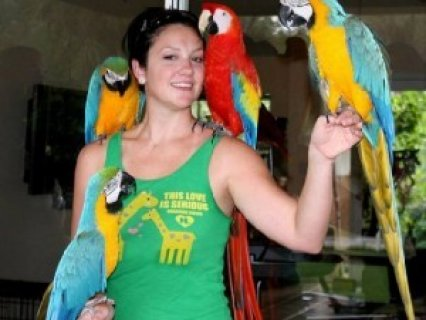 Blue & Gold Macaw Parrots