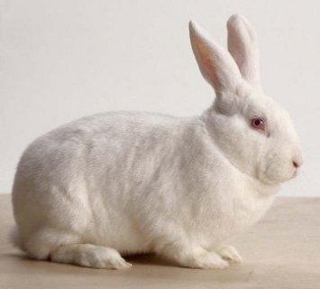 ارانب للبيع باسعار معقوله