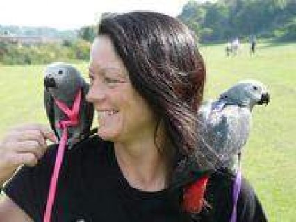 Adorable African Grey Parrot for sale