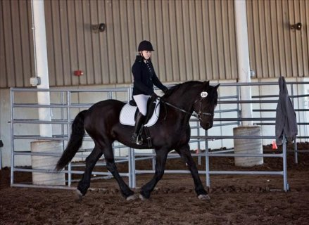 AMAZING AND ENERGETIC FRIESIANT HORSE FOR SALE XM