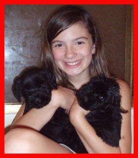 Giant Schnauzer Puppies for sale...