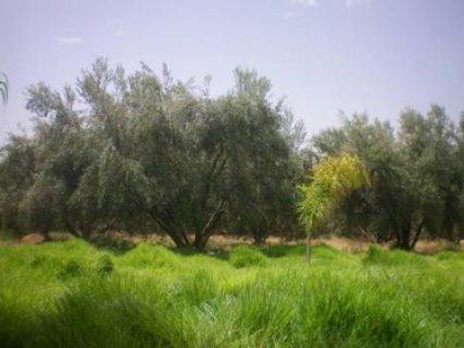 ارض للبيع للاستثمار تقع على طريق  قليبيه الهواريه