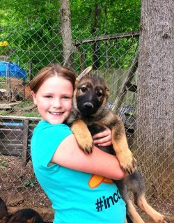 German Shepherd puppies for you.