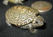 very lovey,charming home raised Turtles  for sale.