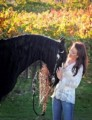 healthy talented friesian horse for sale