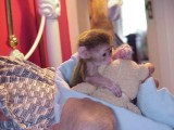FRIENDLY MONKEYS FOR ADOPTION   We are searching f