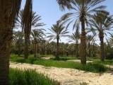 غابة للبيع بدوز